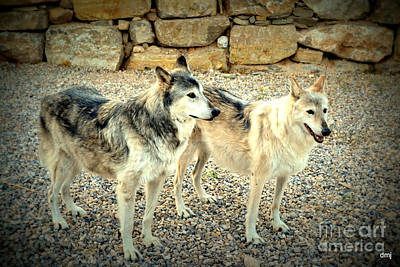 Photograph - wolves XI by Diane montana Jansson