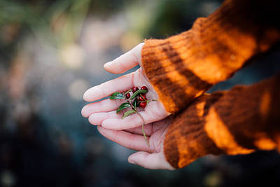 Autumn Leaf Photograph - Woman Hands Holding Cranberries by Aldona Pivoriene