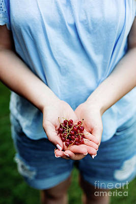 Photograph - Woman Holding Cranberries In Her Hands. by Michal Bednarek