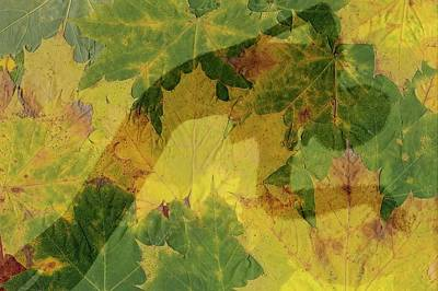 Photograph - Woman On Autumn Leaves by Michael Mogensen