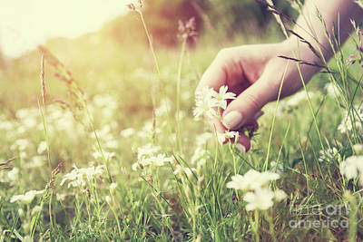 Photograph - Woman Picking Up Flowers On A Meadow, Hand Close-up. Vintage Light by Michal Bednarek