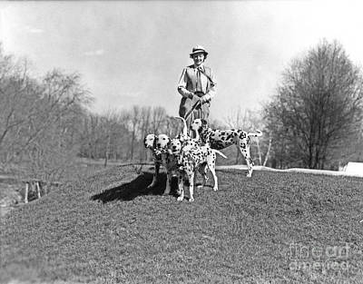 Pet Care Photograph - Woman Walking Dalmations, C.1930s by H. Armstrong Roberts/ClassicStock