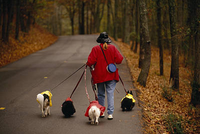 Cute Tree Images Photograph - Woman Walks Her Army Of Dogs Dressed by Raymond Gehman