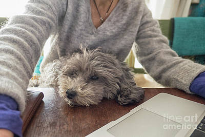 Photograph - Woman With Dog On Lap Working by Patricia Hofmeester