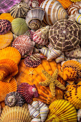 Spiral Photograph - Womderful Seashells by Garry Gay