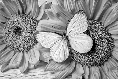 Photograph - Womderful White Butterfly by Garry Gay