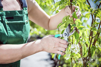 Photograph - Women Gardener Cutting Tree Branch. by Michal Bednarek