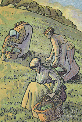 Gleaners Painting - Women Gathering Mushrooms by Camille Pissarro