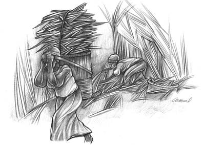 Hop Drawing - Women Of Cane by Michael Colbert
