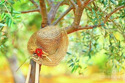 Photograph - Womens Hat On The Tree by Anna Om