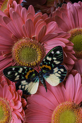 Wondeful Butterfly On Pink Daisy Art Print by Garry Gay