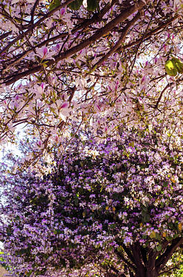 Photograph - Wonder Of Nature by Andrea Mazzocchetti