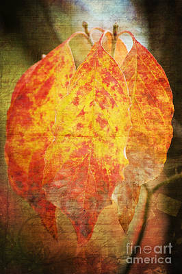 Autumn Trees Mixed Media - Wonderful Autumn by Angela Doelling AD DESIGN Photo and PhotoArt