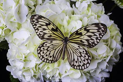 Hydrangea Photograph - Wonderful Butterfly by Garry Gay
