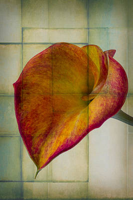 Wonderful Calla Lily Art Print by Garry Gay