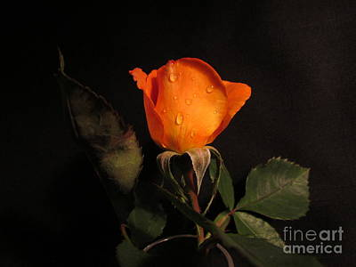 Photograph - Beautiful  Rose by Joyce Woodhouse