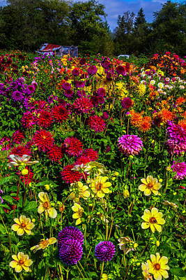 Of Dahlia Photograph - Wonderful Dahlia Garden by Garry Gay