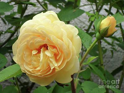 Photograph - Wonderful In Yellow by Jasna Dragun