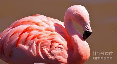 Wonderful Pink Flamingo Art Print by Jennifer Craft