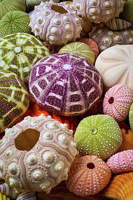 Echinoderm Photograph - Wonderful Sea Urchins by Garry Gay