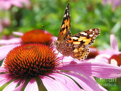 Lady Butterfly Photograph - Butterfly by Angela Doelling AD DESIGN Photo and PhotoArt