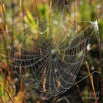 Photograph - Wonderful Web by Carol Groenen