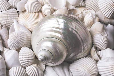 Wonderful White Seashells Print by Garry Gay