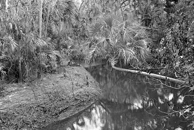 Photograph - Wonderful Wild Florida by Carol Bradley