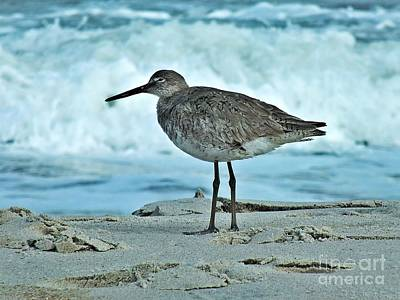Photograph - Wonderful Willet  by Christy Ricafrente