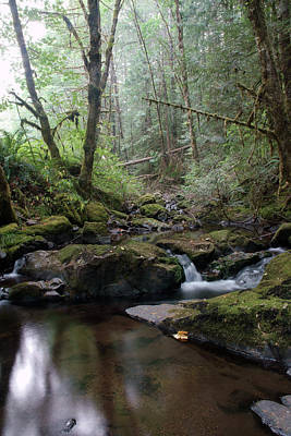 Photograph - Wonderful Wilson Creek by Ben Upham III