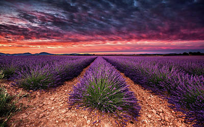 Photograph - Wonderful World by Jorge Maia