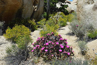 Photograph - Wonderland - Joshua Tree National Park by Glenn McCarthy Art and Photography
