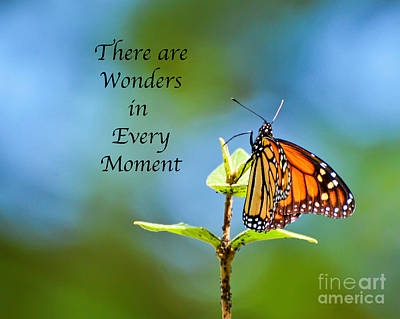 Photograph - Wonders In Every Moment by Kerri Farley