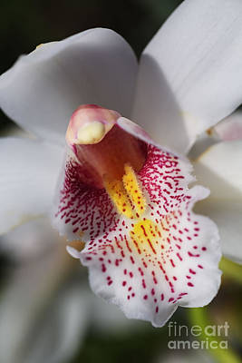 Photograph - Wonders Of A Orchid by Joy Watson