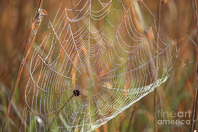 Photograph - Wonders Of Nature - Dewdrop Web by Carol Groenen