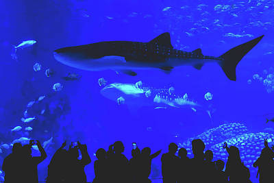 Photograph - Wonders Of The Aquarium by Pixabay
