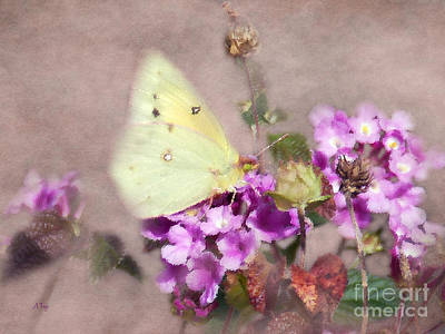 Colias Philodice Photograph - Wondrous Works  by Anita Faye