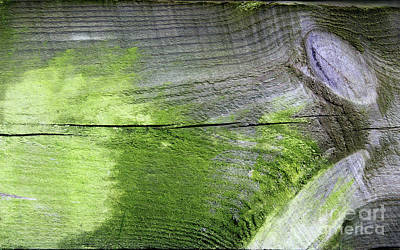 Photograph - Wood Abstract by Karen Adams