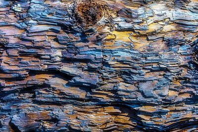 Driftwood Photograph - Wood Bark Texture by Garry Gay