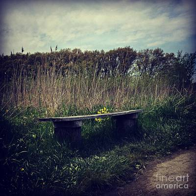 Frank J Casella Royalty-Free and Rights-Managed Images - Wood Bench and Yellow Flowers by Frank J Casella