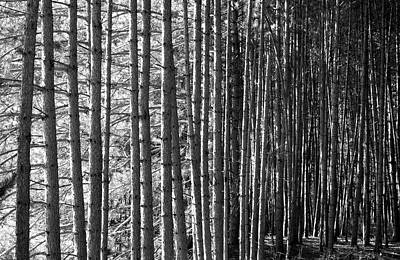 Photograph - Wood Contrast  by Valentino Visentini