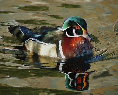 Digital Art - Wood Duck 2 by Ernie Echols