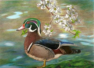 Wood Duck Drawing - Wood Duck And Dogwood by Courtney Trimble