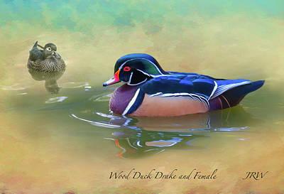 Wood Duck Digital Art - Wood Duck Drake And Female by John Williams