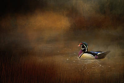 Photograph - Wood Duck In The Creek by Jai Johnson