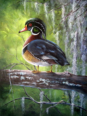 Wood Duck Print by Mary McCullah