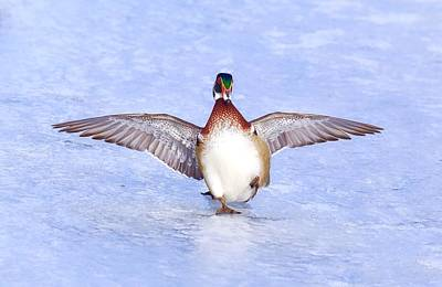 Photograph - Wood Duck On Ice by Lynn Hopwood