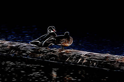 Photograph - Wood Duck Pair - Fractal by Lawrence Christopher