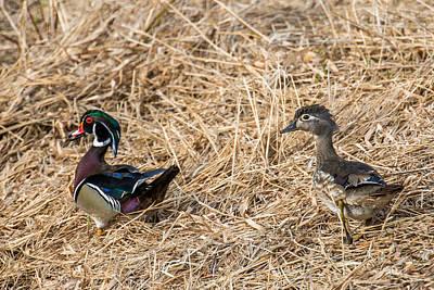 Drake Photograph - Wood Duck Pair by Paul Freidlund