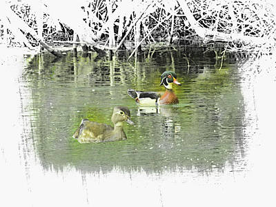 Digital Art - Wood Duck Pair Swimming. by Rusty R Smith